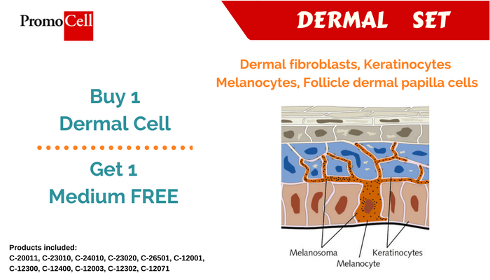Primary cells, dermal cells, keratinocytes, Promocell, cell culture, cultivo celular, keratinocytes, fibroblasts