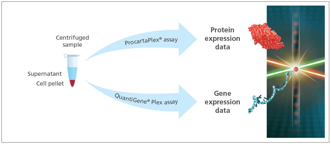 esquema Procartaplex Quantigene invitrogen eBioscience