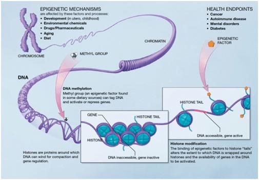 Epigenetica_Inmunoprecipitacion_ChIP_Chromatrap