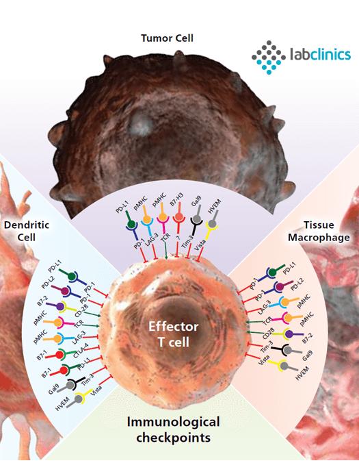 eBioscience, Affymetrix, ThermoFisher, immuno, oncology, luminex, antibodies, PD-1, CTLA-4