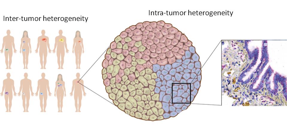 eBioscience, Affymetrix, ThermoFisher, immuno, oncology, tumor cell, host, immune, tumor, heterogeneity, mutations,