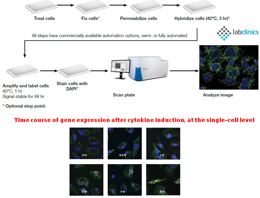 RNAview, eBioscience, Affymetrix, ThermoFisher, FISH, cell assay, single-cell