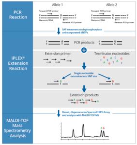 SNPs, iPLEX, genotipado, PCR, Agena, MassArray,