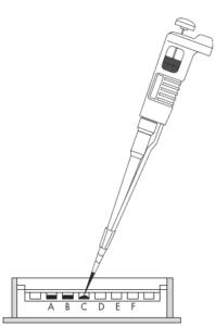 electroforesis, gel, capilar, SDS, bidimensional, gel poliacrilamida, proteínas