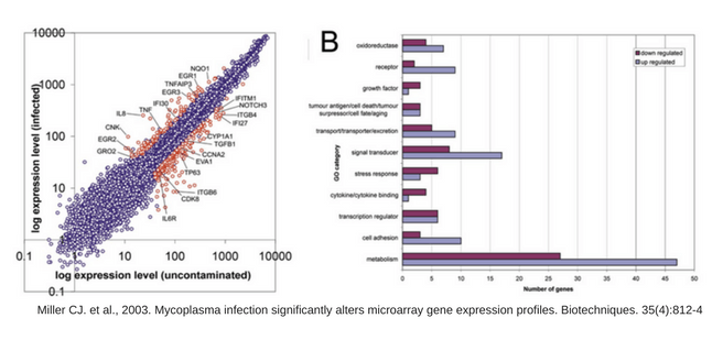 microarrays, expression array, expression profile, Mycoplasma, niveles de expresión, contaminación, contamination