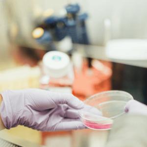 cultivo celular, cell culture, mycoplasma, test, análisis, detección, testing, detection, tratamiento, kit, treatment, Minerva biolabs, venor