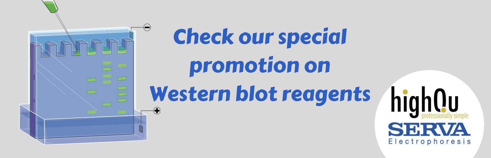SERVA, oferta, western blot, electroforesis, transferencia, proteína, anticuerpo