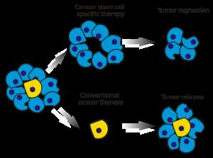 cancer stem cells, células madre cancerosas, tumor, célula, cáncer, cancer, cultivo primario, cultivo celular, cell culture, primary cell culture, diferenciación, differentiation
