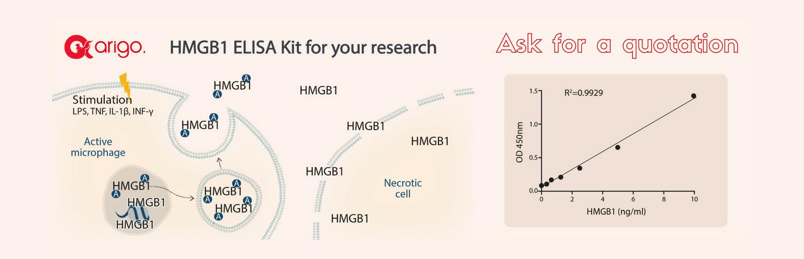 macrophages, monocytes and dendritic cells, célula dendrítica, macrófagos, immune cells, inmune, sistema, chromatin protein, cromatina, HMGB1, ELISA, human, amphoterin