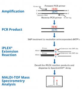 chemistry, iPLEX, química, MassARRAY, Agena bioscience, PCR, amplicón, extension, sprectroCHIP,