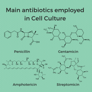 Antibiotics, antibioticos, penicillin, streptomicin, amphotericin, gentamicin, gentamicina, estreptamicina, cultivo celular, in vitro, células,