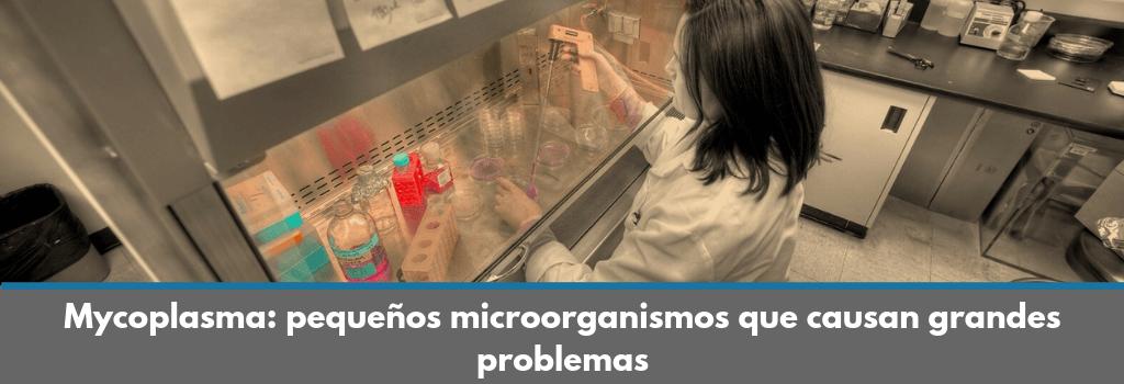 Minerva Biolabs, test, Mycoplasma, qPCR, detección, contaminación, cultivo celular, in vitro, medio, PCR, kit, producto destacado