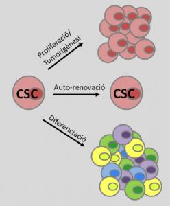 iPSC, totipotential, pluripotential, multipotential, stem cells, cell culture, cultivo celular, células madre, cultivo, in vitro, regeneration, regeneración