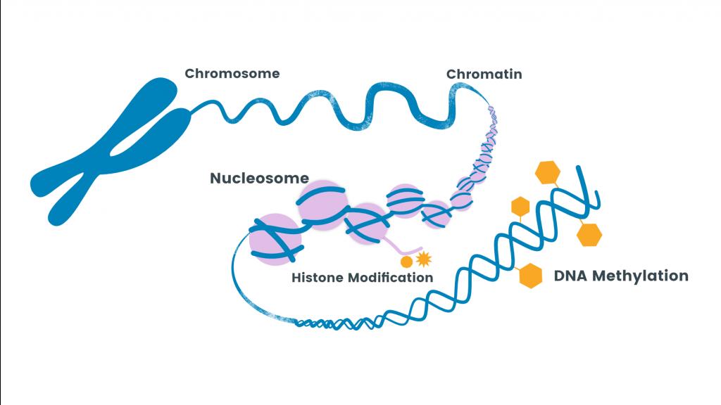 metilación, agena bioscience, methylation, CpG, MassARRAY, disease, enfermedad, análisis, bisulfito,