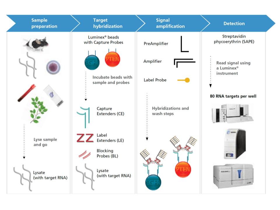 quantigene, eBioscience, affymetrix, gene expression, qPCR, cDNA, purification, multiplex, primer, transcripción reversa, RT, qPCR,