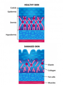 cell culture, cosmetics, collagen,