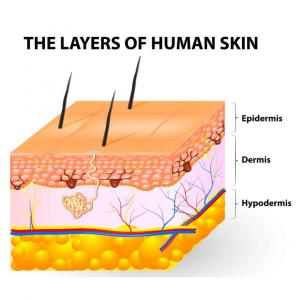 skin, cosmetics, piel, cosméticos, Promocell, cell culture, cultivo celular